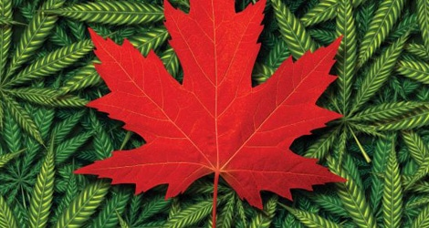 Cannabis Legalization in Canada And Its Legal Implications For You